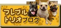 フレブルトリオブログ